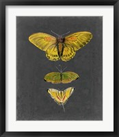 Butterflies on Slate I Framed Print