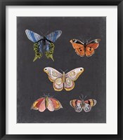 Butterflies on Slate II Framed Print
