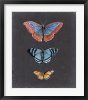 Butterflies on Slate III Framed Print