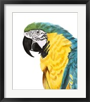 Watercolor Parrot Framed Print