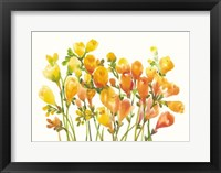 Freesia I Framed Print