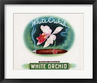 Framed White Orchid
