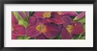 Daylilies Framed Print
