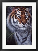 Framed Tiger In The Midst