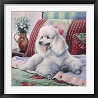 Framed White Poodle