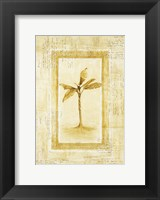 Palm 2 Framed Print
