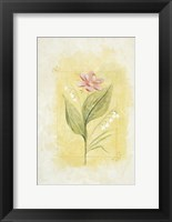 Pink Bloom 2 Framed Print