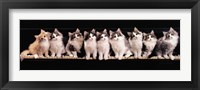 Framed Klassical Kittens
