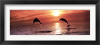 Framed Sunset Dolphins