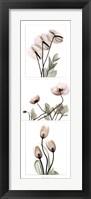 Framed Flowering Triptych
