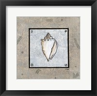 Sea Shell on Blue II Framed Print