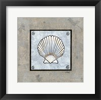 Sea Shell on Blue III Framed Print
