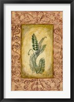 Decorative Ferns I Framed Print