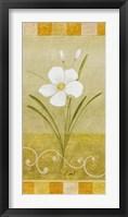 Delicate White II Framed Print