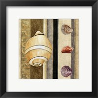 Shell Collage I Framed Print