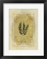 Fern Delight I Framed Print