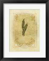 Fern Delight II Framed Print