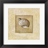 Bonnet Shell Framed Print