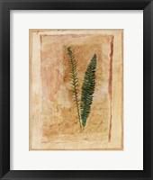 Botanical II Framed Print