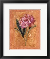 Botanical III Framed Print