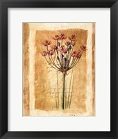 Botanical IV Framed Print