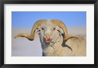 Framed Large Ram