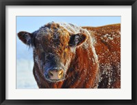Framed Bull on Ice