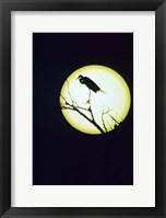 Framed Egret Silhouette
