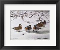 Framed Winter Wood Ducks