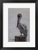 Framed Resting Pelican