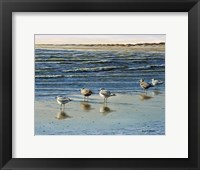Framed Cape May Herring Gulls