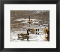 Framed North Carolina Geese