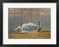 Framed South Carolina Geese