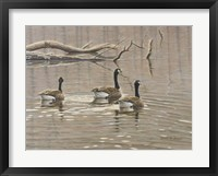 Framed Early Spring Geese Trio
