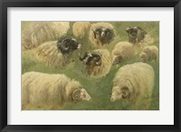 Framed Black-Faced Ram and Sheep, 10 studies