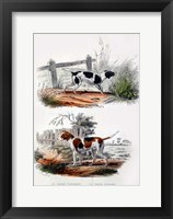Framed Pair of Dogs I
