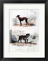 Framed Pair of Dogs II