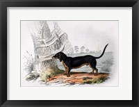 Framed Dog V