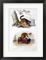 Framed Wild Cat and Angora Cat