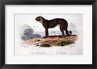 Framed Leopard I