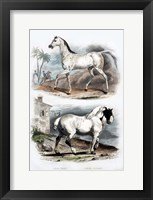 Framed Pair of Horses