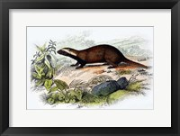 Framed Badger