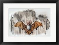Framed Bat II