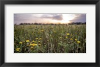 Framed Flowers in the sunset