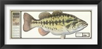 Framed World Record Largemouth Bass
