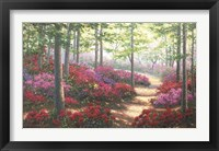 Framed Woodland Trail