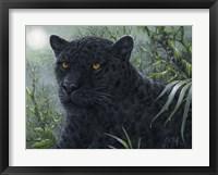 Framed Black Beauty