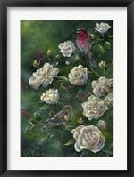Framed Purple Finch