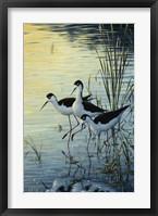 Framed Elegant Trio - Blacknecked Stilts