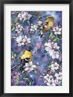 Framed Gold Finch & Blossoms
